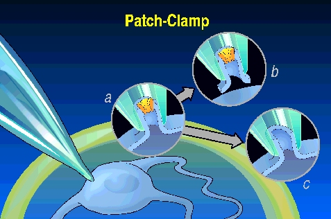 Automated whole-cell patch clamp electrophysiology